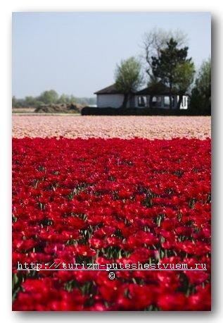цветы на праздник 1 мая - фото