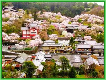 Город Нара быстро развился до уровня культурного и политического центра страны.