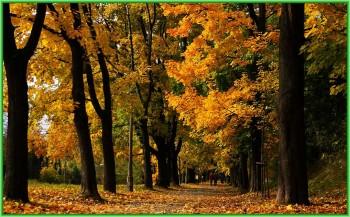 Краков – это город парков - аллея Джоржа Вашингтона