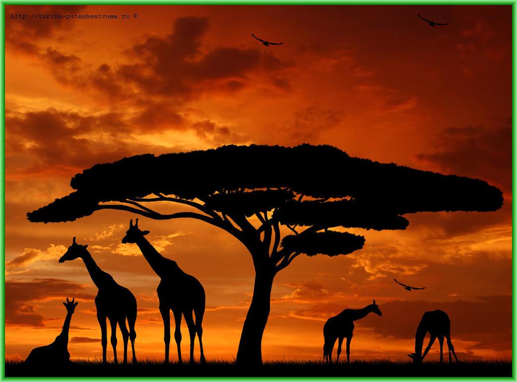 За что мы любим Африку - здесь рассветы и закаты мгновенны