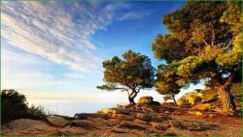 деревья в парке Пор-Кро фото
