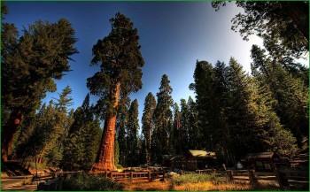 По Калифорнии в октябре - Национальный Парк Секвойя фото