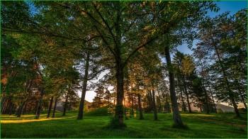 Норвегия фото природы - лес
