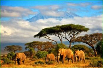 Поездка в Танзанию в феврале фото