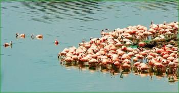 Фламинго в Национальном танзанийском парке Аруша фото