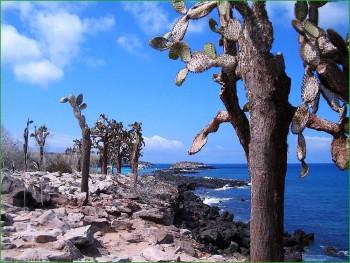 кактусы на побережье Галапагосских островов фото