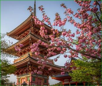 Цветущая сакура в апреле в Киото фото