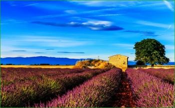 Путешествие в Прованс фото