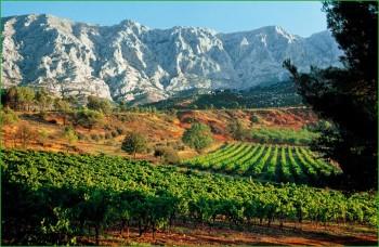 Путешествие в Прованс -виноградники на юг Франции фото