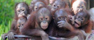 15 детенышей обезьян пытались ввезти в Россию