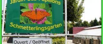 Сад бабочек открывает новый сезон в Люксембурге