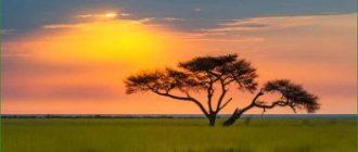 Парк Этоша - Намибия