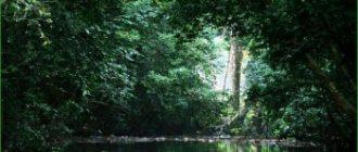 Дождевой лес Гола - Сьерра-Леоне