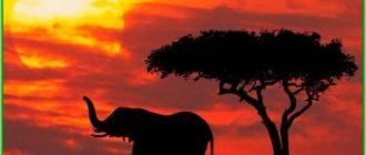 Кения - климат