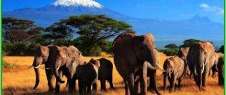 Когда лучше ехать в Кению