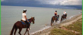 На лошадях по побережью Венесуэлы