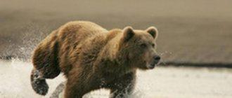 В национальном парке на людей набросились медведи