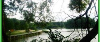"""Сафари-парк """"Подосинки"""" откроют в Московской области"""