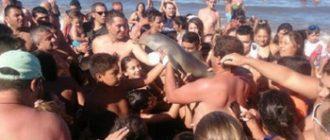 Селфи унесло жизнь дельфина