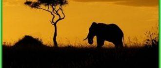 Советы по Кении - 13 полезных мелочей
