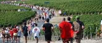 Винный марафон во Франции